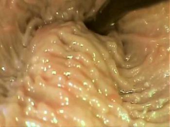 Cream pie inside view